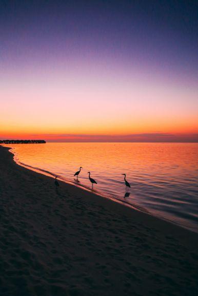 Sunshine and Island Hues... At Velassaru Maldives (46)