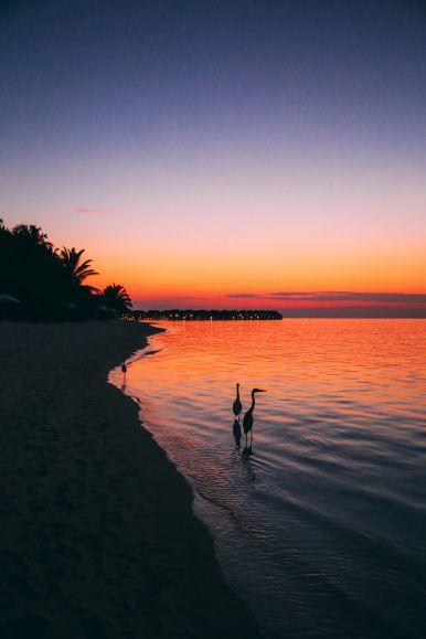 Sunshine and Island Hues... At Velassaru Maldives (50)