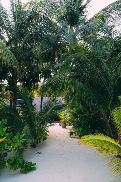 On Island Time… In Maafushivaru, Maldives (21)