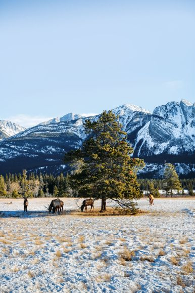 Dog Sledding In Jasper And Ice Hockey In Edmonton - 2 Canadian 'Must-Do's! (1)