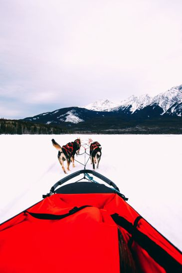 Dog Sledding In Jasper And Ice Hockey In Edmonton - 2 Canadian 'Must-Do's! (18)