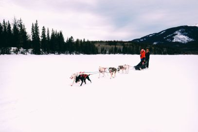 Dog Sledding In Jasper And Ice Hockey In Edmonton - 2 Canadian 'Must-Do's! (20)