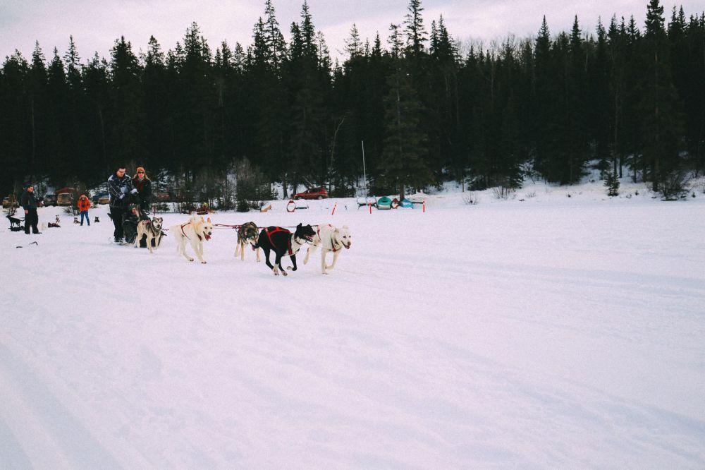 Dog Sledding In Jasper And Ice Hockey In Edmonton - 2 Canadian 'Must-Do's! (28)