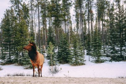 Dog Sledding In Jasper And Ice Hockey In Edmonton - 2 Canadian 'Must-Do's! (40)