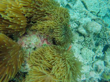 Swimming With Wild Turtles And Those Amazing Island Colours... At Kandolhu Island, Maldives (16)