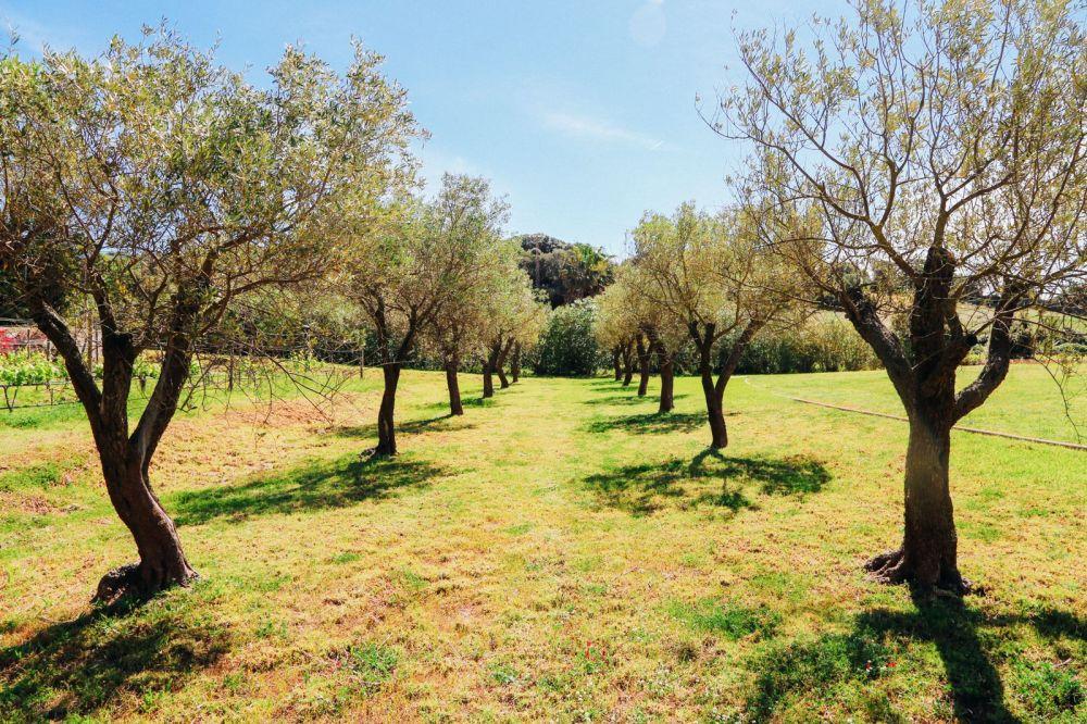Vineyards, Seasides And Tapas... In Menorca, Spain (50)