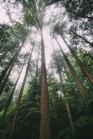 12 Beautiful Places To Visit in British Columbia, Canada (15)