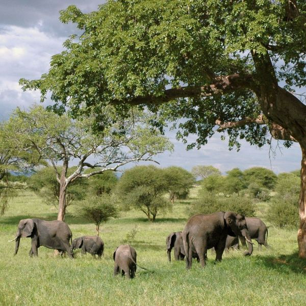 11 Countries You Need To Visit In Africa This Year And Why! (6)