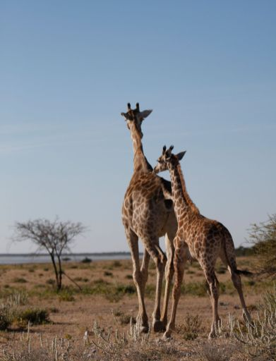 11 Countries You Need To Visit In Africa This Year And Why! (14)