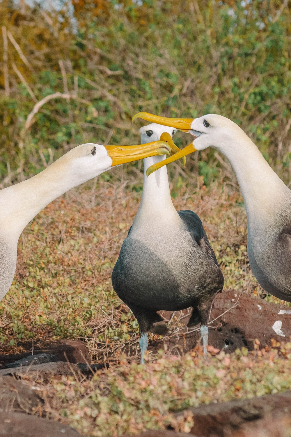 Animals To See In The Galapagos Islands (14)