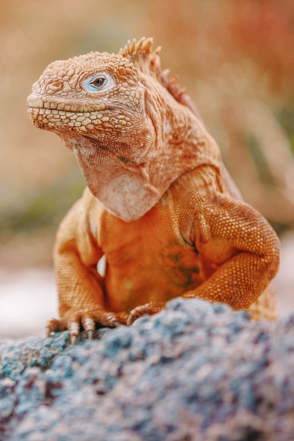 Animals To See In The Galapagos Islands (9)