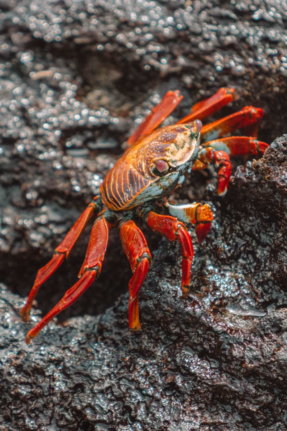 Animals To See In The Galapagos Islands (10)