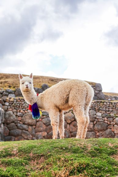 4 Amazing Ancient Inca Sights To See In Cusco And The Sacred Valley of the Incas (90)
