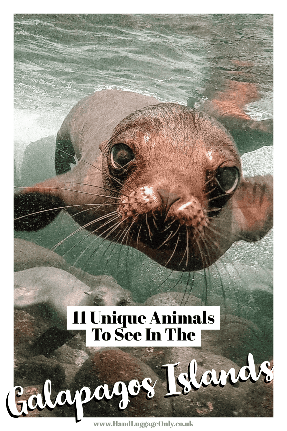 Animals To See In The Galapagos Islands (1)