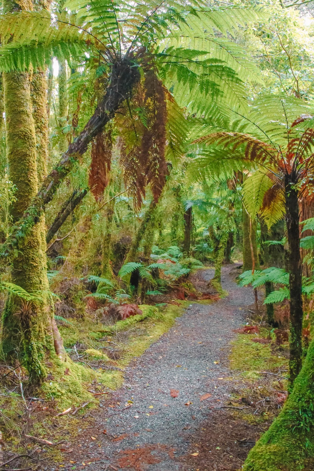 Best Hikes In New Zealand (5)