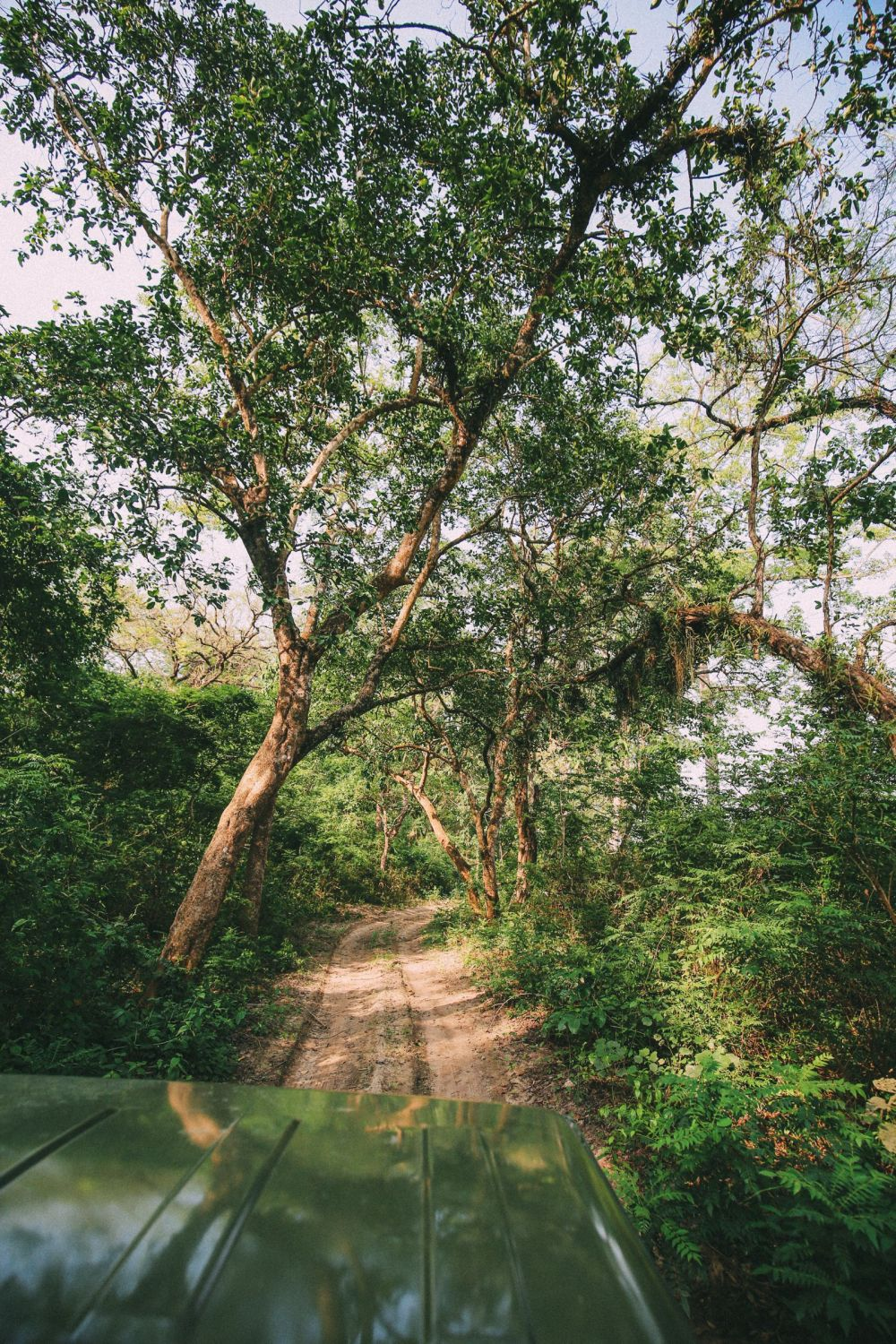 The Search For The One-Horned Rhino... In Chitwan, Nepal (23)