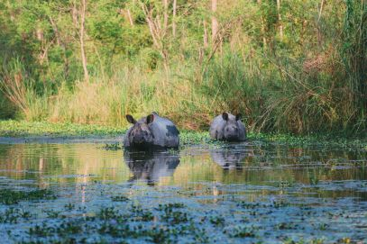 The Search For The One-Horned Rhino... In Chitwan, Nepal (34)