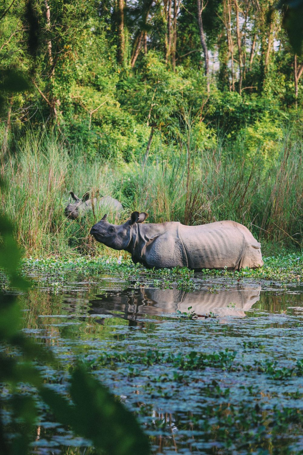 The Search For The One-Horned Rhino... In Chitwan, Nepal (36)