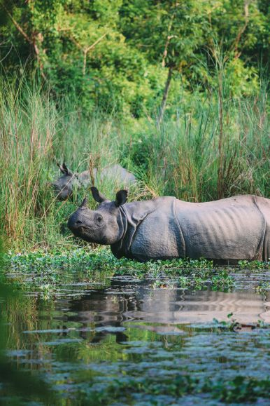 The Search For The One-Horned Rhino... In Chitwan, Nepal (37)