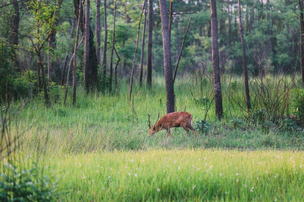 The Search For The One-Horned Rhino... In Chitwan, Nepal (55)
