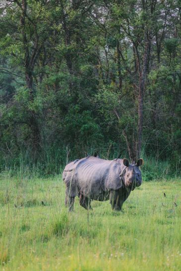 The Search For The One-Horned Rhino... In Chitwan, Nepal (64)