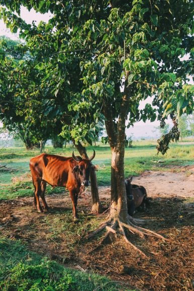 The Sights, Sounds And People Of Chitwan, Nepal (3)
