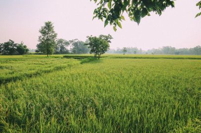 The Sights, Sounds And People Of Chitwan, Nepal (12)