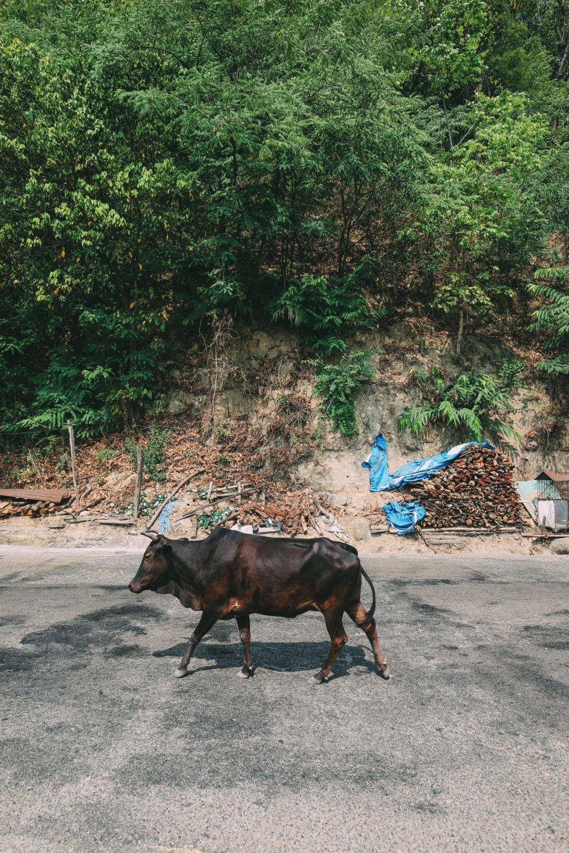 From Chitwan To Lumbini, Nepal (8)