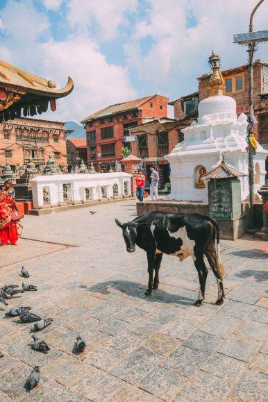 Exploring Swayambhunath Stupa - The Monkey Temple In Kathmandu, Nepal (18)