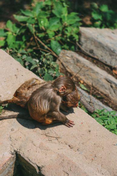 Exploring Swayambhunath Stupa - The Monkey Temple In Kathmandu, Nepal (49)