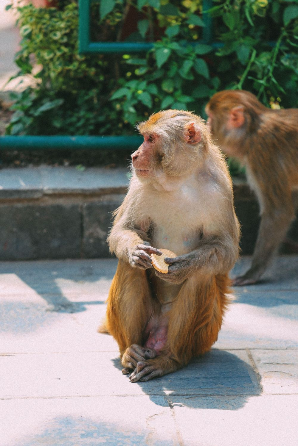 Exploring Swayambhunath Stupa - The Monkey Temple In Kathmandu, Nepal (50)