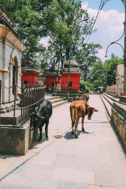 An Afternoon In Pashupatinath Temple – Nepal's Most Sacred Temple… In Kathmandu (33)