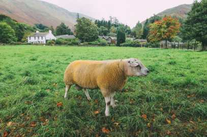 The Perfect 4 Day Itinerary For Visiting England's Beautiful Lake District (88)