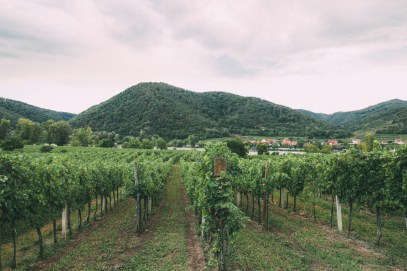 A Trip To Wachau - The Most Beautiful Valley In Austria (35)