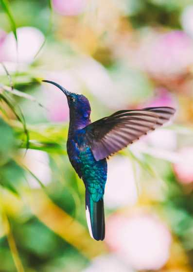 10 Amazing Things To Do In Costa Rica (19)