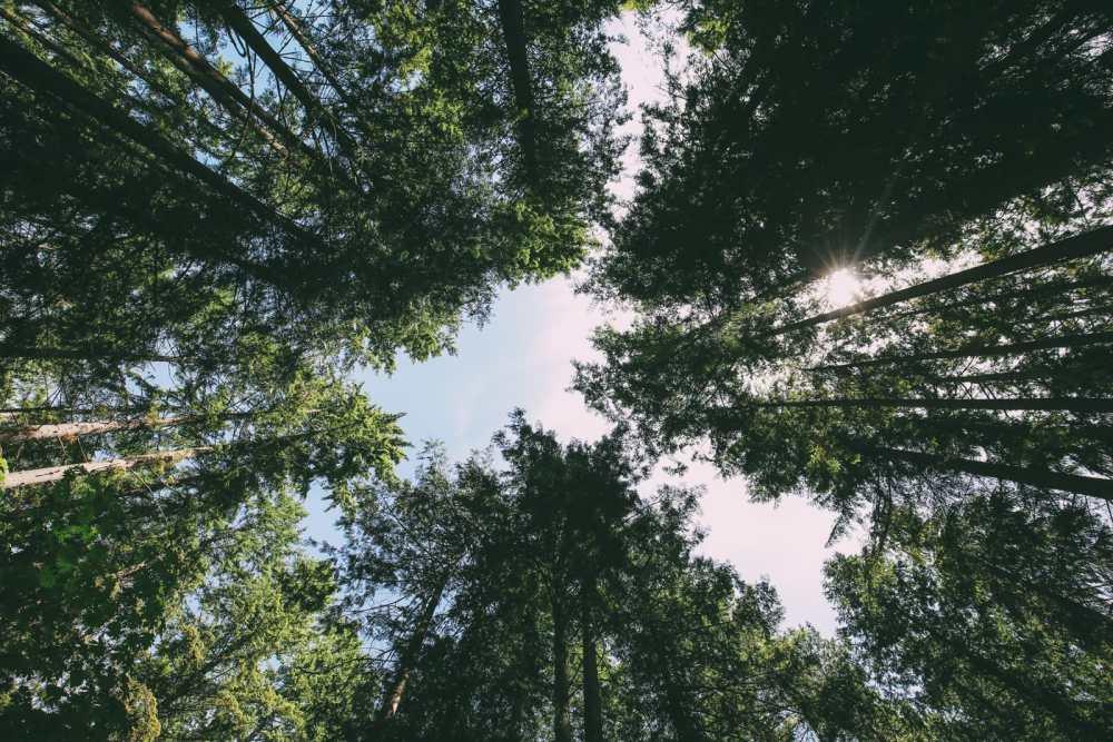 Driving The Sunshine Coast Of British Columbia Canada (25)