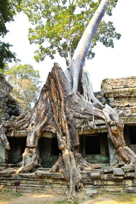 11 Incredible Temples You Have To See In Angkor, Siem Reap, Cambodia (2)