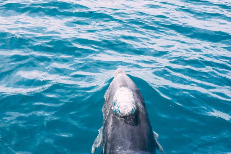 11 Really Impressive Reasons Why You Need To Visit Hawaii (28)