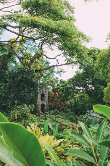 First Impressions Of The Island Of St Kitts (45)