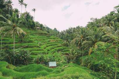 Bali Travel - Tegalalang Rice Terrace In Ubud And Gunung Kawi Temple (6)
