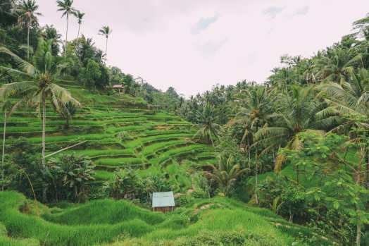 Bali Travel - Tegalalang Rice Terrace In Ubud And Gunung Kawi Temple (6)