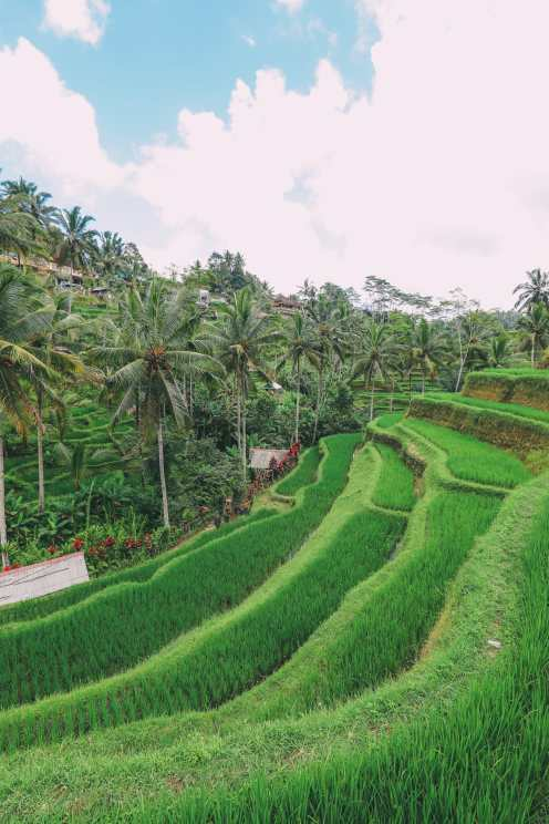Bali Travel - Tegalalang Rice Terrace In Ubud And Gunung Kawi Temple (7)