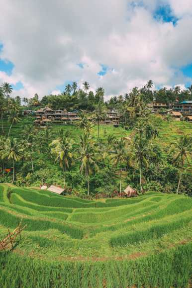 Bali Travel - Tegalalang Rice Terrace In Ubud And Gunung Kawi Temple (12)
