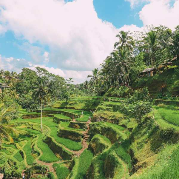 Bali Travel - Tegalalang Rice Terrace In Ubud And Gunung Kawi Temple (13)