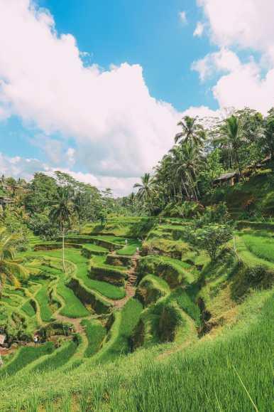Bali Travel - Tegalalang Rice Terrace In Ubud And Gunung Kawi Temple (13)