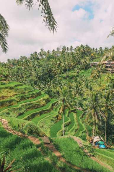 Bali Travel - Tegalalang Rice Terrace In Ubud And Gunung Kawi Temple (18)