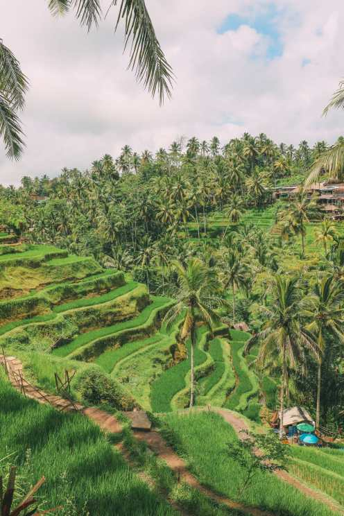 Bali Travel - Tegalalang Rice Terrace In Ubud And Gunung Kawi Temple (18)