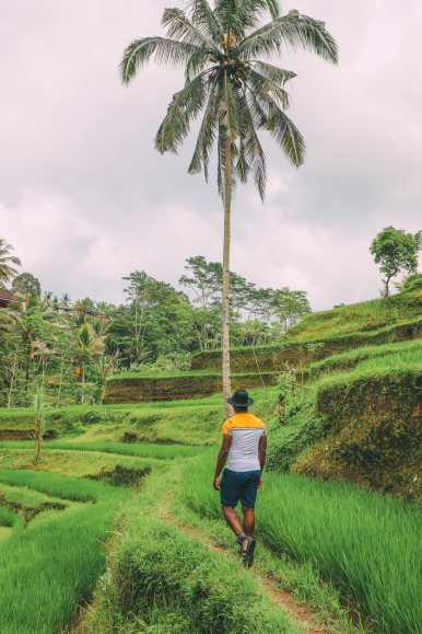 Bali Travel - Tegalalang Rice Terrace In Ubud And Gunung Kawi Temple (19)