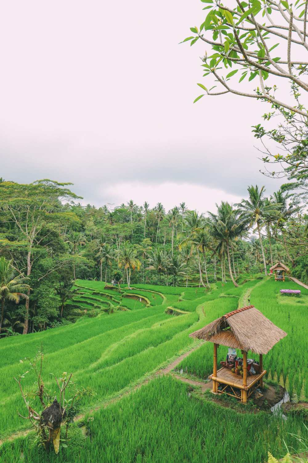 Bali Travel - Tegalalang Rice Terrace In Ubud And Gunung Kawi Temple (47)