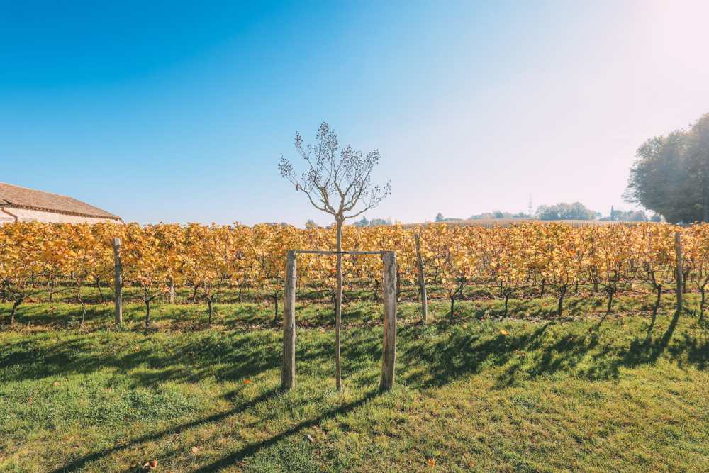 French Wine, French Castles And Delicious French Food - A Trip To French Wine Country (43)